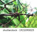Image Of A Thorn Fence. Dry...