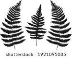 three leaf fern silhouettes.... | Shutterstock .eps vector #1921095035