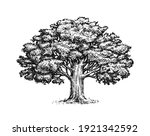 Oak Tree With Leaves Isolated...