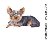 Yourshire Terrier   Watercolor...