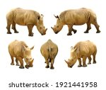 rhinoceros isolated on white... | Shutterstock . vector #1921441958