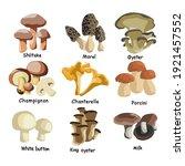 set of assorted edible... | Shutterstock .eps vector #1921457552