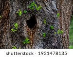 Close Up Tree Trunk With Hollow ...