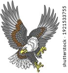 american whitehead bald eagle. ...   Shutterstock .eps vector #1921533755