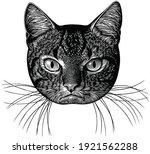portrait of an angry cat. art... | Shutterstock .eps vector #1921562288