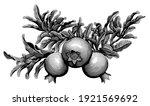 pomegranate fruit on a branch.... | Shutterstock .eps vector #1921569692
