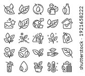 plants line icons. mint leaf ... | Shutterstock .eps vector #1921658222