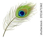 Peacock Feather Realistic In...