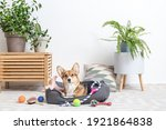 Cute Dog With Different Pet...