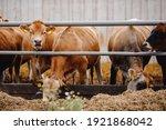 Dairy Farm Livestock Industry....