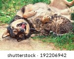 Stock photo dog and cat playing outdoor dog lying on the back 192206942