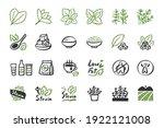 stevia icon set. hand drawn... | Shutterstock .eps vector #1922121008