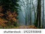Small photo of Autumn forest mist path view. Mist forest path. Forest mist parh view. Path in forest mist