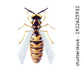 macro of a wasp. yellow and... | Shutterstock .eps vector #1922625932