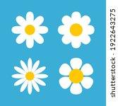 daisy chamomile vector flower...   Shutterstock .eps vector #1922643275