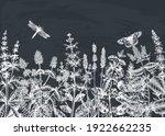 hand sketched summer herbs...   Shutterstock .eps vector #1922662235