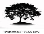 shadow of big rain tree | Shutterstock . vector #192271892