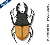 Beetle Insect Vector...