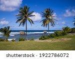Two Palm Trees In Bathsheba...