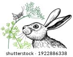a cute hare examines a...   Shutterstock .eps vector #1922886338