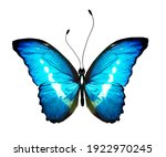 Color Morpho Butterfly  ...