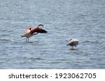 Cute Flamingo Flying Over The...