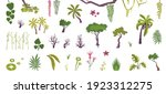 plants set with flat isolated... | Shutterstock .eps vector #1923312275