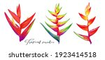 tropical flowers  bird of... | Shutterstock . vector #1923414518