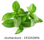 mint leaves isolated | Shutterstock . vector #192342896