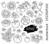 organic vegetable tomato set.... | Shutterstock .eps vector #1923509102