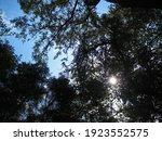 Sunburst Seen Through Foliage...