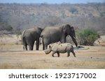 A Black Rhino And Two Elephants