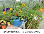 watering can  pepper and...   Shutterstock . vector #1924032992