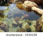 flora of red sea | Shutterstock . vector #1924158