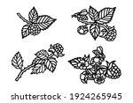 Raspberry Vector Drawing....