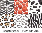 watercolor set of animals skin... | Shutterstock . vector #1924434908