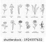 Birth Month Flowers Simple...