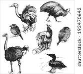 birds | Shutterstock . vector #192470642