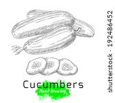 Cucumbers, vector hand drawing