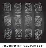 chalkboard illustration of...   Shutterstock .eps vector #1925009615