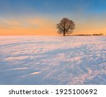 Winter Landscape With Bare Tree ...