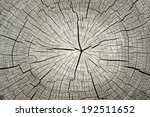 Cracked Pine Tree Trunk In...