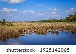 Egrets And Spoonbills Fishing...