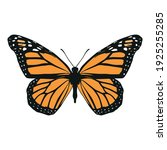isolated colored butterfly....   Shutterstock .eps vector #1925255285