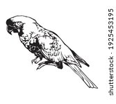 Black Outline Parrot Vector...