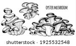 oyster mushrooms vector... | Shutterstock .eps vector #1925532548