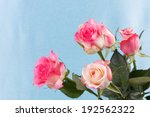 fresh pink roses on a... | Shutterstock . vector #192562322