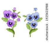 garden flowers. pansies  set on ... | Shutterstock .eps vector #1925623988