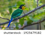 Super portrait of  Long-tailed Broadbill ( Psarisomus dalhousiae (Jameson, 1835) )  in real nature at KY NP , Thailand.