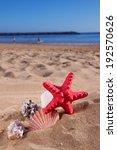 starfish ans seashells frame on ... | Shutterstock . vector #192570626